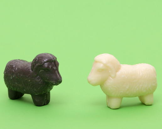 black or white sheep from sheep milk